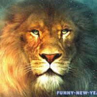 Гороскоп на ноябрь для Львов