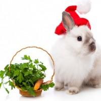 Кролик: гороскоп на 2015 год