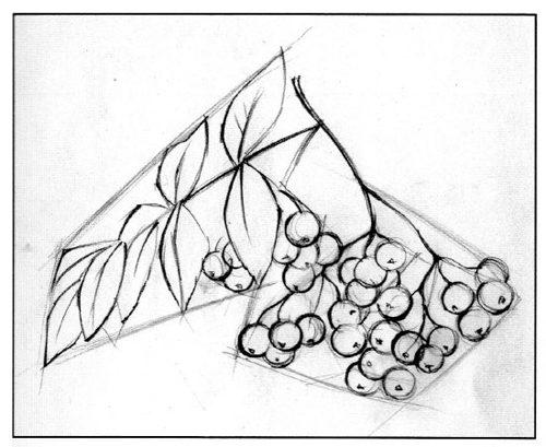 Как нарисовать ветку рябины