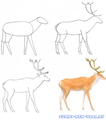 Как нарисовать оленя карандашом поэтапно