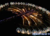 новый год 2015 в ОАЭ