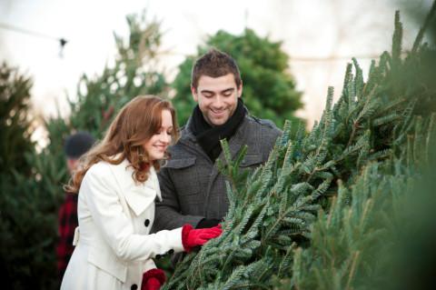 молодая пара выбирает елку