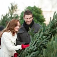 Как выбрать елку к Новому 2017 году